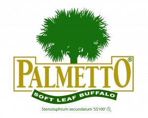 Palmetto soft leaf buffalo stenotaphrum secundatum'SS100'