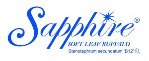 Sapphire soft leaf BuffaloTurf-stenotaphrum secundatum'B12'