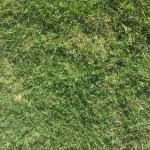 Greenlees Park Couch Turf