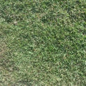 Empire Zoysia Turf