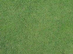 grass_wintergreen (2)